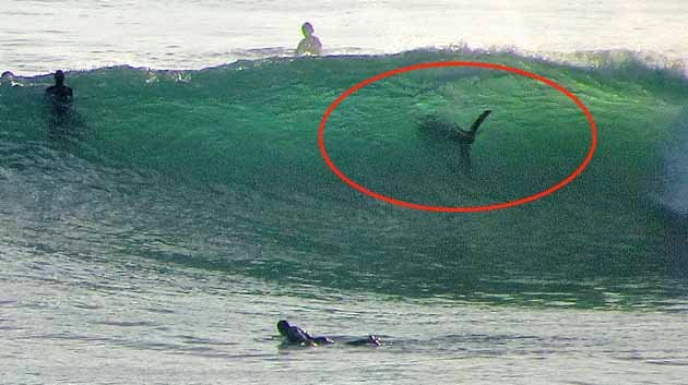 Unbelievable Photo Of Shark Spotted Along San Diego S