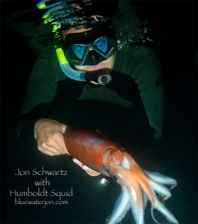 Local diver takes the plunge with dangerous squid cbs news 8 san diego ca news station for Humboldt swimming pool schedule