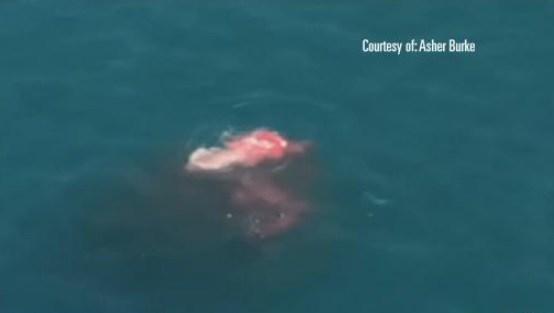 The Cove Sea Lion Adventure La Jolla Scuba With Seals