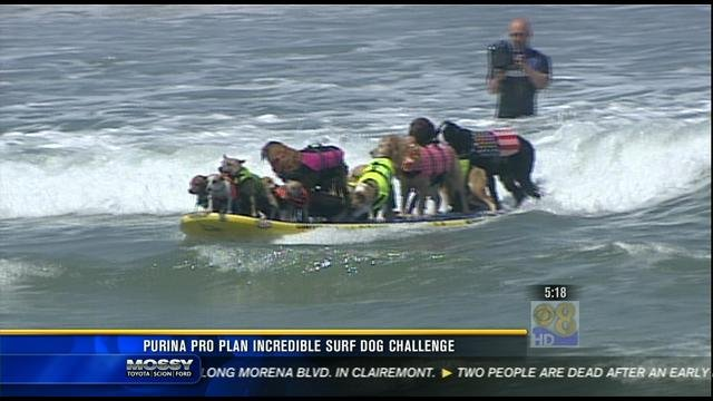 Surfing dogs 39 world record attempt cbs news 8 san for Worldwide motors san diego ca