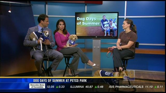 Station Park Honda >> Dog Days of Summer at Petco Park - CBS News 8 - San Diego, CA News Station - KFMB Channel 8