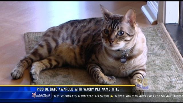 Pico De Gato Awarded With Wacky Pet Name Title Cbs News 8 San Diego Ca News Station Kfmb