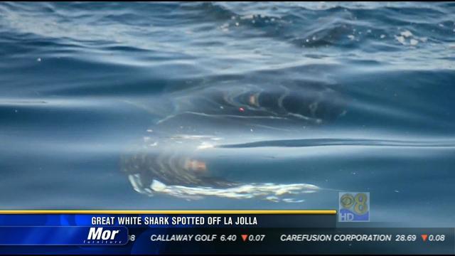 Caught On Video Great White Off La Jolla Coast Cbs News