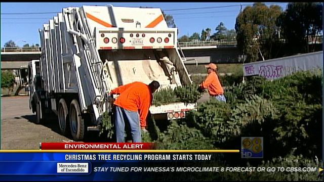 City Of San Diego's Christmas Tree Recycling Program