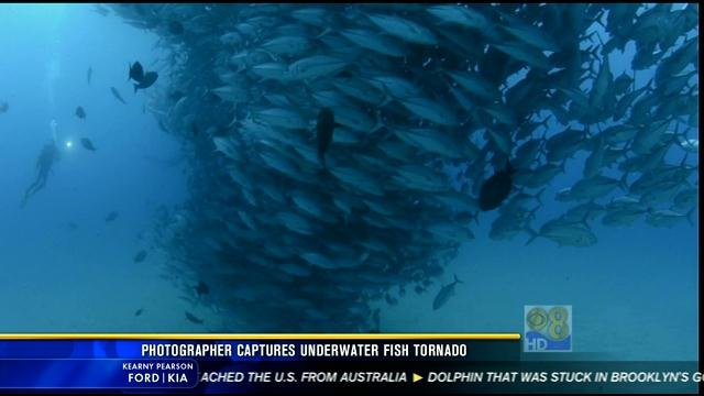Photographer Captures Underwater Fish Tornado Cbs News 8