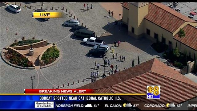 Honda National City >> Bobcat spotted near Cathedral Catholic High School - CBS ...