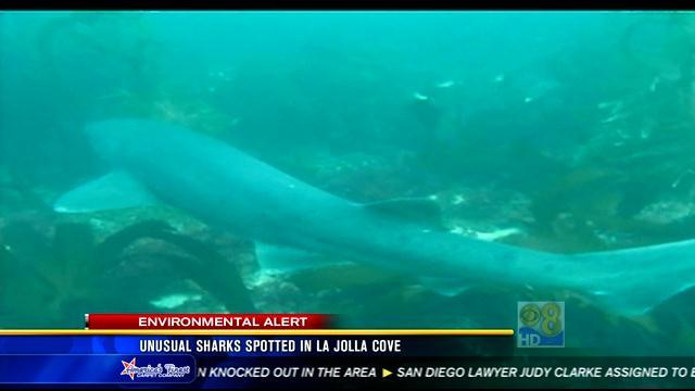 Unusual Sharks Spotted In La Jolla Cove Cbs News 8 San
