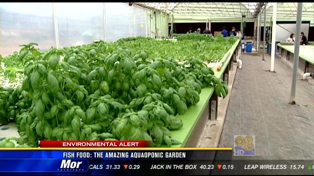 Fish food The amazing aquaponic garden CBS News 8 San Diego