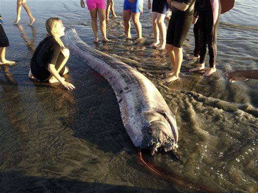 Unexplained Creatures California 'sea serpen...