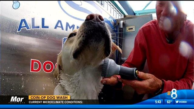 All american coin operated dog wash cbs news 8 san diego ca san diego cbs 8 so youve taken your pooch to the beach and hes covered in sand and you just dont have the time of the money to take your dog solutioingenieria Images