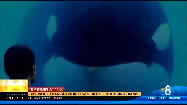 Bill may ban seaworld san diego from using orcas cbs for Worldwide motors san diego ca