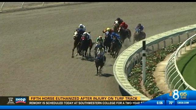 Horse euthanized after injury on turf track - CBS News 8 ...