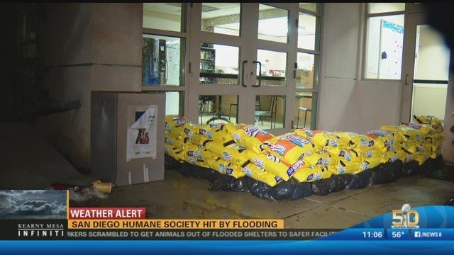 Kitty Litter Stops Flooding