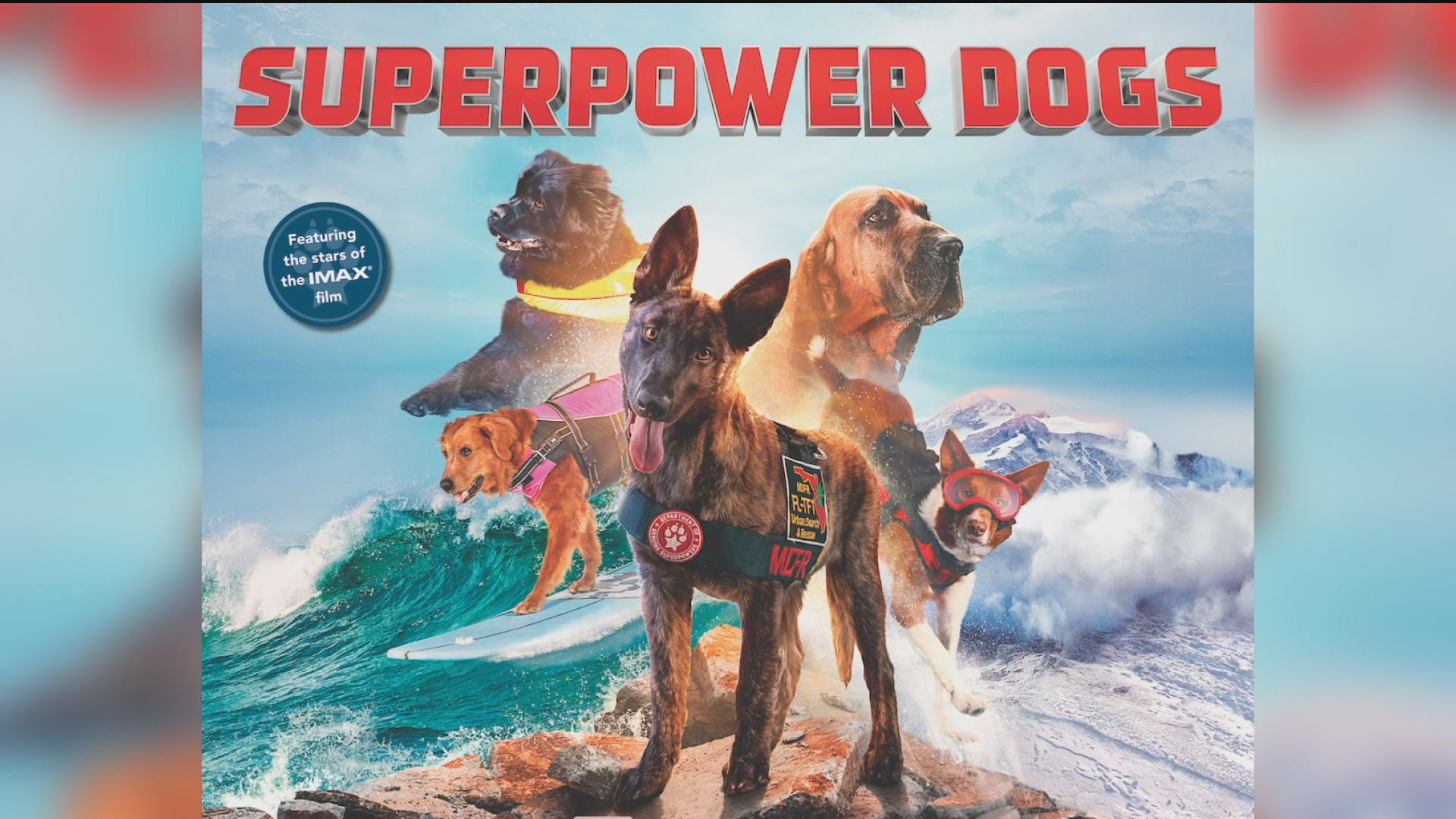 New IMAX movie follows superhero dogs including Ricochet the surfing dog