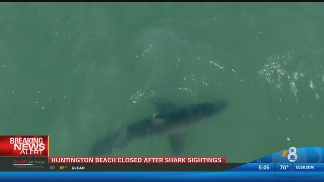 shark sightings prompt closure   southern california beaches cbs news  san diego ca