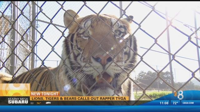Lions, Tigers and Bears calls out rapper - CBS News 8 ...