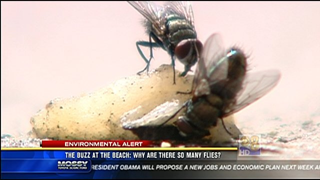 San Go Cbs 8 Flies At The Beach That S Normal But People There Say Are Just Too Many Being More Of A Nuisance Than Usual