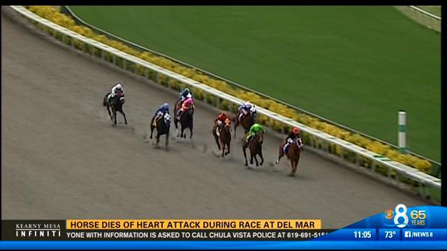 Horse drops dead on race