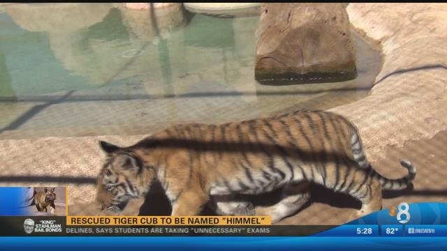 Rescued tiger cub to be named 'Himmel' - CBS News 8 - San ...